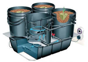 6 Types of Hydroponic Grow Systems