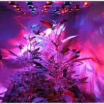 Best Indoor Grow Lights for Marijuana Growth Stages