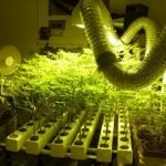 Grow in Hydro: The Do's & Don'ts in Marijuana Hydroponics