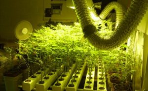 grow in hydro