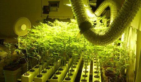 grow in hydro