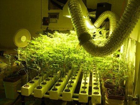 Grow In Hydro The Do S Amp Don Ts In Marijuana Hydroponics