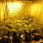 Go, Glow, Grow - Advantages of Marijuana Indoor Grow Room