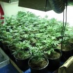 Picking the Best Grow Lights for Marijuana