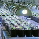 Online Tips for Your Marijuana Grow Seeds and Supplies