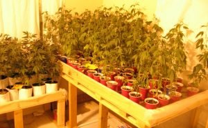 grow weed indoors