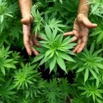 """Easy Pot, Easy Grow: How to Grow Pot with a """"Green"""" Thumb"""