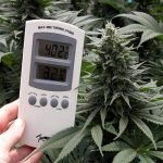 Your Grow Room Temperature