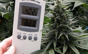 grow room temperature
