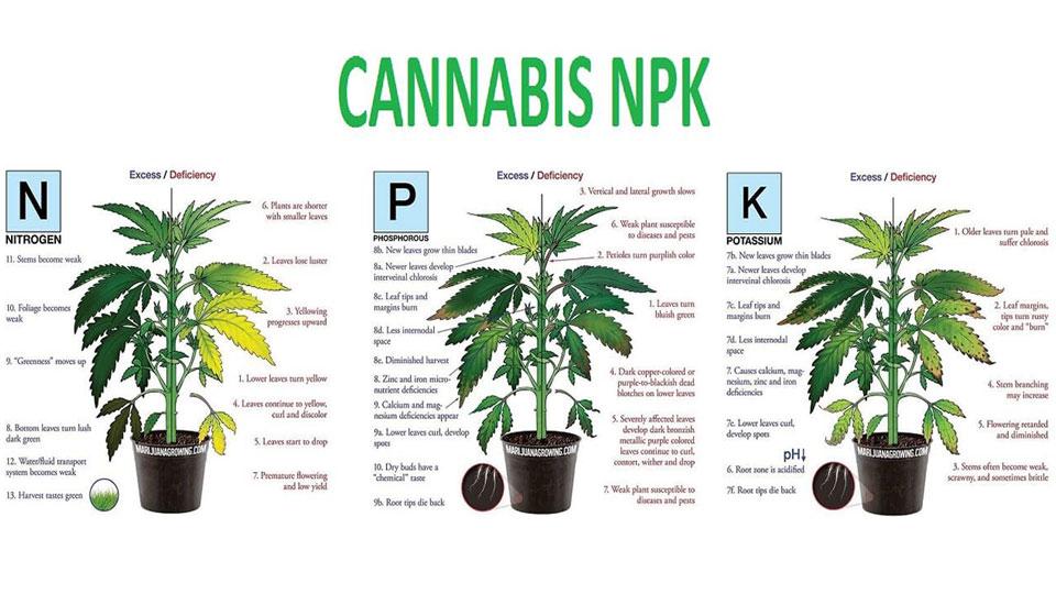 Cannabis Nutrient Chart