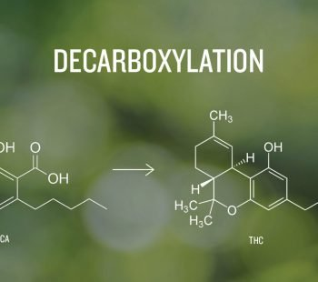 Decarboxylation Why You Should & How To Decarb Correctly