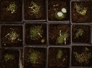 What Is Micro Growing And How To Grow