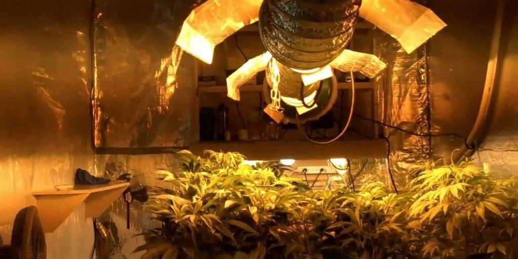 Grow Marijuana Plants Indoors