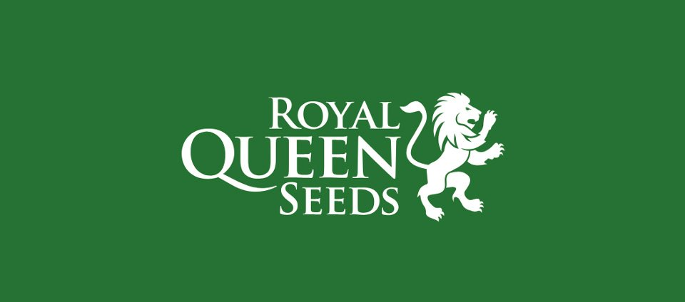Royal queen seeds online