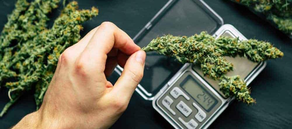 Weighing Scale for Weed