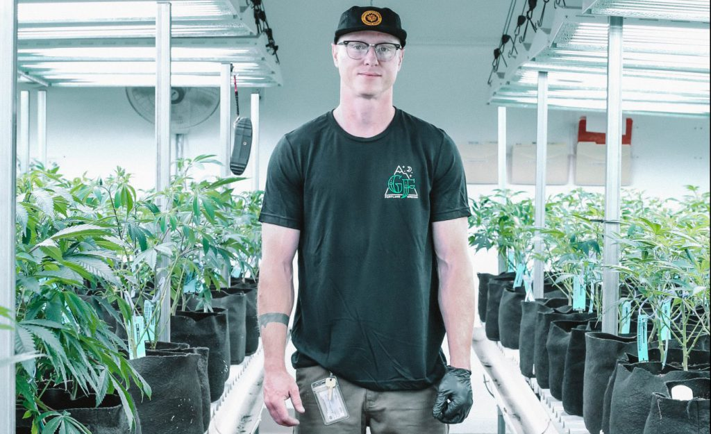 Man on cannabis indoor garden