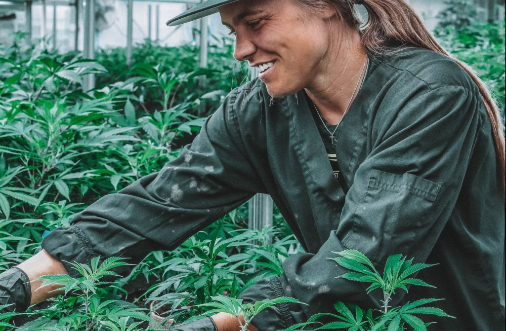 Women on cannabis indoor garden